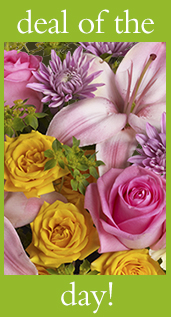 Shop for the Flower Deal of the Day