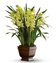 Splendides orchidées