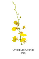 Oncidium Orchidy