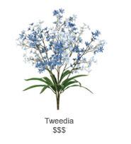Tweedia