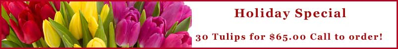 Send Flowers to Tiburon, CA with Ark Angels Flowers, your local Tiburon florist