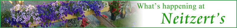 Send Flowers to Coldwater, MI with Neitzerts Greenhouse, your local Coldwater florist