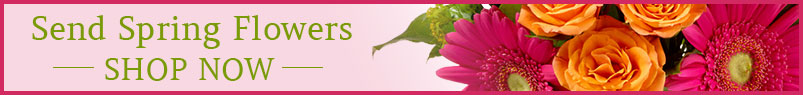 Send spring flowers to Greensboro, NC with Send Your Love Florist & Gifts, your local florists