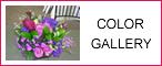Color Gallery